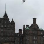 bird over Scotland