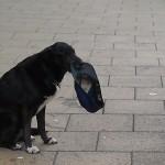 Dog Panhandling